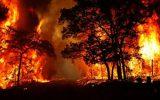 بیش از ۱۲ هزار هکتار جنگل و مرتع در آتش سوخت