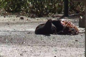 تصویری از جسد عامل انتحاری در حرم امام + تصویر