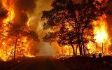 آتشافروزان جنگلها و مناطق حفاظت شده ۵ سال زندانی میشوند