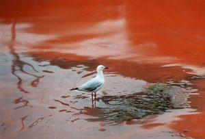 آلودگی میکروبی سواحل بندرعباس
