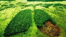 بررسی فرآیندها و ارائه راهکارهای مختلف کاهش آلودگیهای زیست محیطی ناشی از انتشار دیاکسیدکربن حاصل از گازهای احتراق