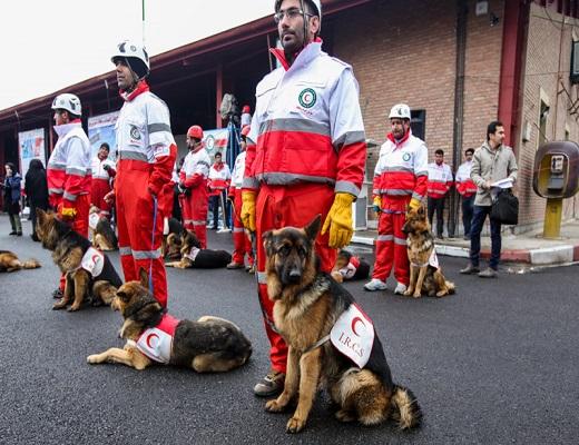 از شارژ انبارهای امدادی تا آموزش سگهای خانگی