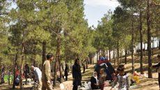 دود بدهی شهرداری به وزارت نیرو در چشم درختان چیتگر!