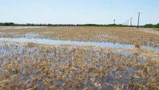خسارت 405 میلیارد تومانی سیل به بخش کشاورزی خوزستان