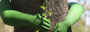 درختان خیابان ولیعصر تهران در شرف نابودی