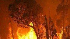 حریق جنگلی، عامل افزایش آلودگی اُزون در شهرها