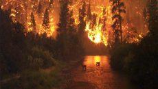 انسان عامل وقوع ۹۵ درصد از آتش سوزی ها است