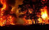 بررسی سیستمهای نظارت و اعلام حریق در جنگل ها