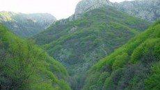 جنگلهای ارسباران در مسیر جهانی شدن