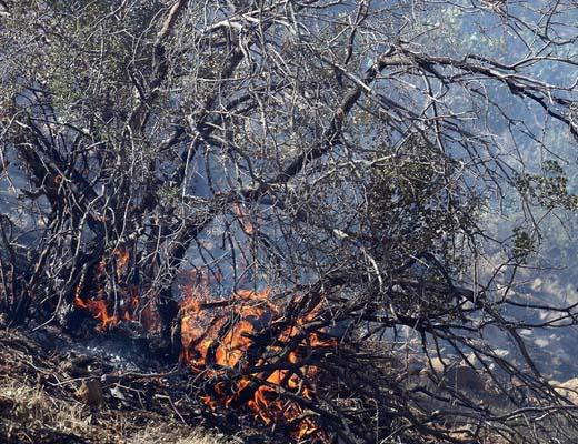 آتش سوزی در منطقه ماله گاله
