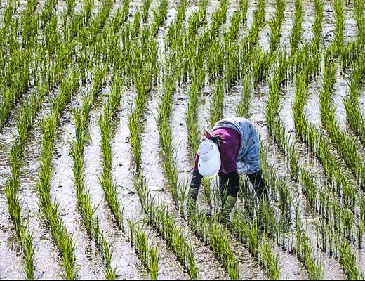 دغدغه همیشگی کشاورزان مازندران برای چیست؟