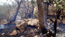 آتش و خشکیدگی اصلیترین دشمنان جنگل