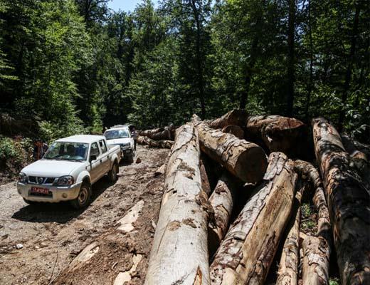 مانیتور آسیب دیدگی درختان در استان ها