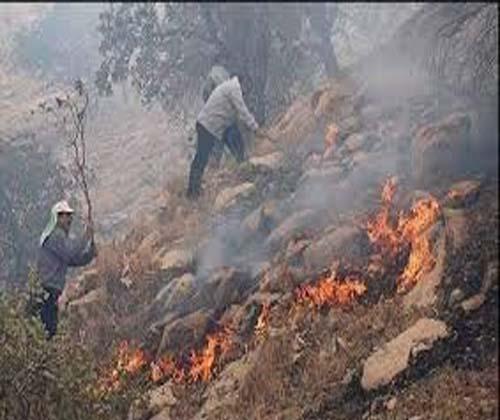 ۸۰ هکتار از جنگل های حفاظت شده شیمبار در آتش سوخت