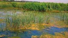 تخریب محیط زیست با کاهش سهم حق آب تالابی