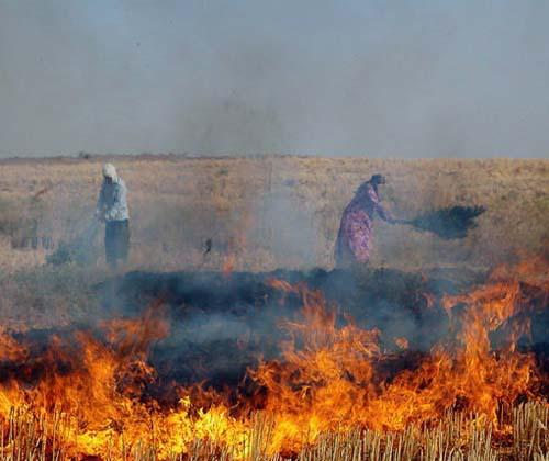 اکثر آتش سوزیهای جنگل و مرتع، عمدی است