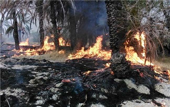 آتش سوزی نخیلات روستای ساربوک پس از ۱۵ ساعت مهار شد