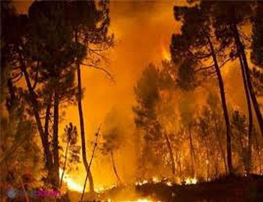 نگرانی از خاکستر شدن گونههای جانوری در آتشسوزیهای ایلام