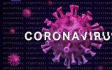 همه چیز درباره ویروس کرونا