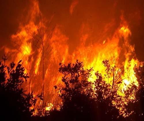 ۷۰ درصد آتش سوزی جنگل های ایران در زاگرس