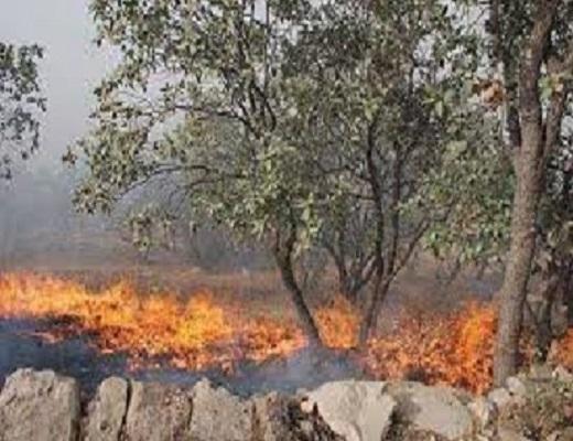 یک هکتار باغ میوه در روستای فرنق خمین در آتش سوخت