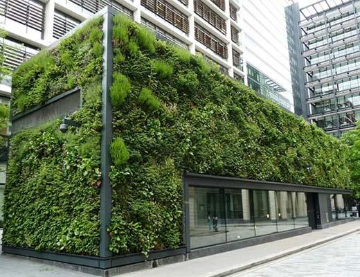دیوارهای سبز؛ راه کاری برای نقش آفرینی بیشتر طبیعت در زندگی شهری