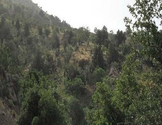 ۴۰ درصد جنگلهای ایران در زاگرس است