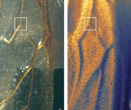ساخت نخستین میکروسکوپ اسکن هلیومی جهان
